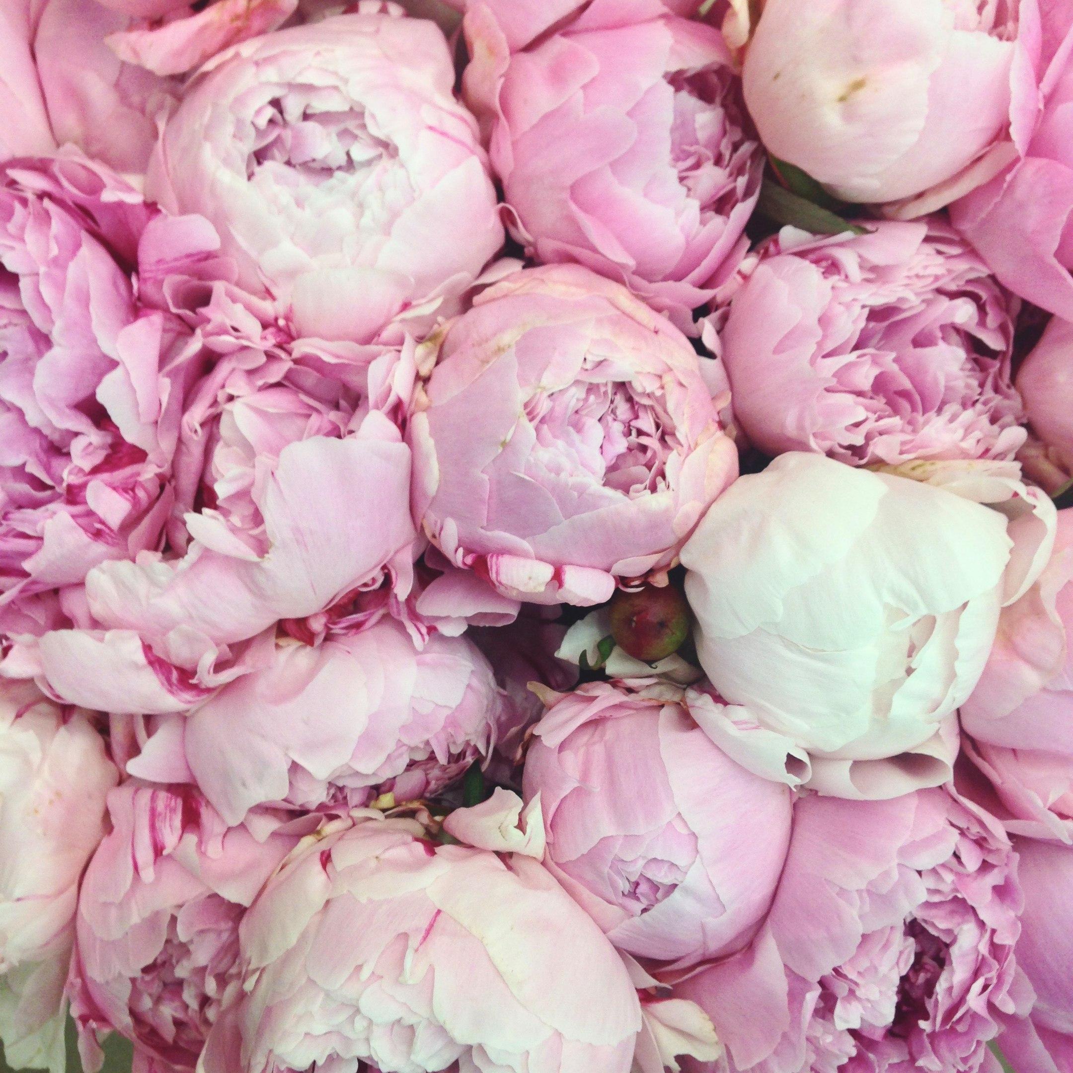 цветы гол 1