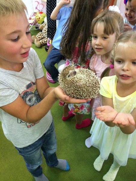 детский клуб зверополис в калининграде -15